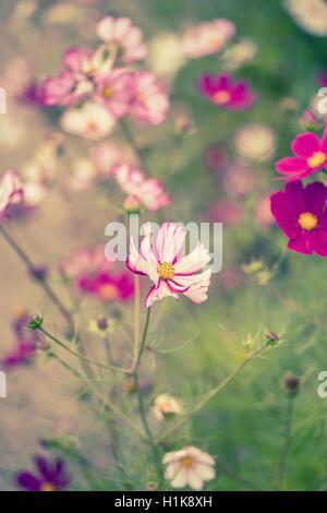 Superbe image de prairie de fleurs sauvages en été avec effet retro vintage filtres appliqués