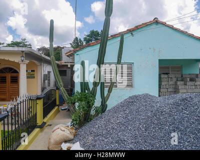 Cactus géant plante poussant près de la maison bleue