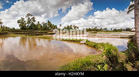 L'INDONÉSIE, Bali, Pupuan, rizières irriguées inondé avec de l'eau prêt à planter du riz, vue panoramique Banque D'Images