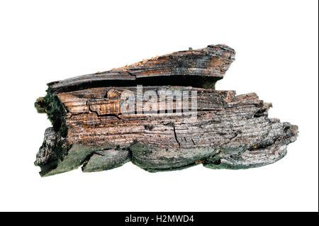 Un morceau de charbon de bois noir sur fond blanc Banque D'Images