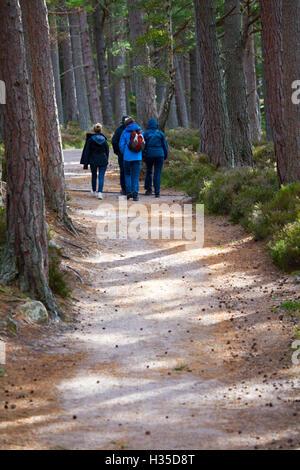 Les marcheurs profiter du soleil autour de Loch Eilien et le Rothiemurchus Forest, Rothiemurchus, Ecosse Banque D'Images