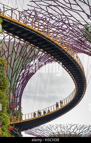Singapour, les jardins de la baie, Supertree Grove, les visiteurs sur l'OCBC skyway marche élevée