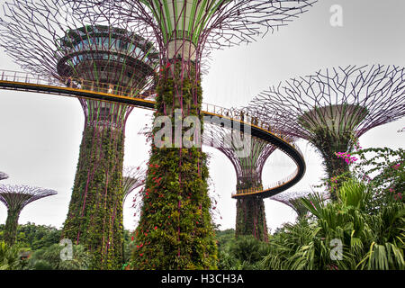 Singapour, les jardins de la baie, Supertree Grove, l'OCBC skyway marche élevée