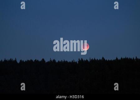 Silhouette des arbres contre le ciel clair Banque D'Images