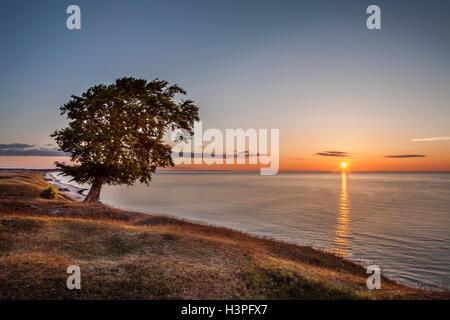 Lonely tree contre la lumière et le lever du soleil sur la mer. Osterlen, Skane / Scania. La Suède. La Scandinavie. Banque D'Images