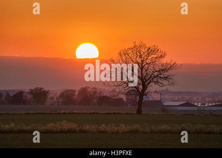 Arbre au coucher du soleil dans un paysage rural en Osterlen, Skane / Scania. La Suède. La Scandinavie. Banque D'Images