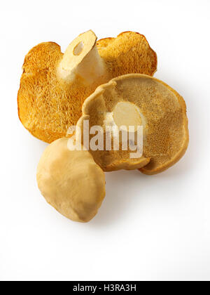 Organique a wiild Pied de mouton (Hydnum repandum) Champignons ou hedgehog mushrooms Banque D'Images