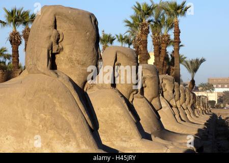 L'Egypte, Luxor, Luxor temple, dans l'avenue de sphinx, Sphingen Banque D'Images