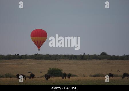 Balloon safari dans le Masai Mara, Kenya, Afrique, Banque D'Images