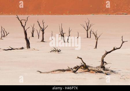 L'Afrique, la Namibie, le désert de Namib, marais salant, Dead Vlei, arbres morts, Banque D'Images