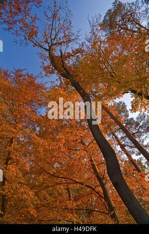 Impression d'automne dans la forêt, Banque D'Images