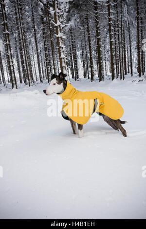 Veste d'hiver en chien dans la neige Banque D'Images