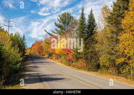 Arbres en couleurs d'automne le long de la route, près de Saint-Jérôme, Laurentides.
