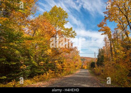 Feuillage de l'automne - les arbres en couleurs d'automne le long de la route, près de Saint-Jérôme, Laurentides.