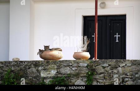 Chat tigré somnoler dans urne grecque en face de l'Église d'Agnos, Corfou, Grèce Banque D'Images