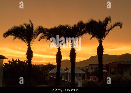 Quatre palmiers en silhouette contre le ciel du soir orange Banque D'Images