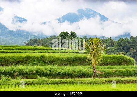 Les rizières en terrasses et de montagnes volcaniques sur un jour de pluie, dans le centre de Jatiluwih dans Bali, Banque D'Images