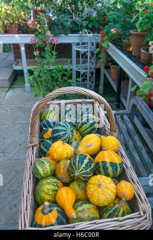 Courges mixte sur l'affichage des fruits mûrs en automne Banque D'Images