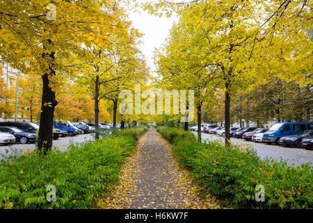 Couleurs d'automne sur les arbres le long sentier sur Metzer Strasse à Prenzlauer Berg à Berlin, Allemagne Banque D'Images