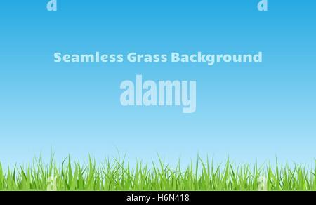 Fond d'herbe verte transparente horizontale avec lames courbées Banque D'Images