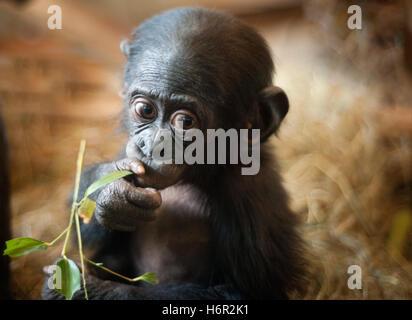 mammifères Banque D'Images