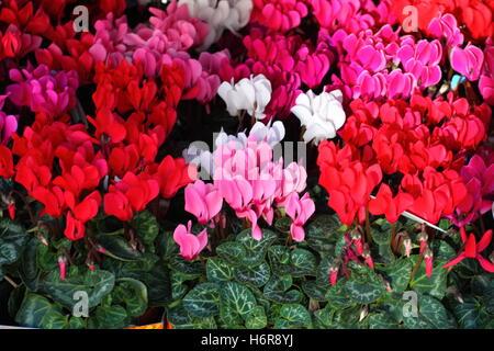 Arrangement de bâtiment de maison belle belle vie beauteously exister en vivant vit vivre fleur gros plan couleur Banque D'Images