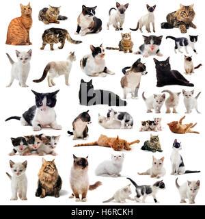 Chat Chats chaton bébé chat chat domestique groupe pussycat belle beauteously pet animal nice jetblack basané noir Banque D'Images