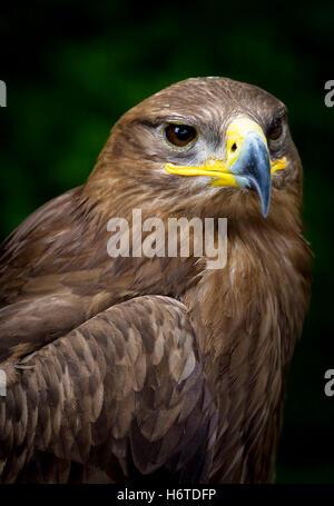 Belle la vie beauteously profil nice existent en vivant vit vivre animaux oiseaux sauvages brunette brun marron Banque D'Images