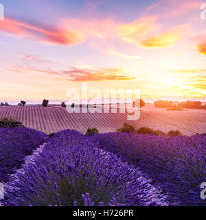 Champ de lavande au coucher du soleil d'été paysage près de Valensole.Provence,France Banque D'Images
