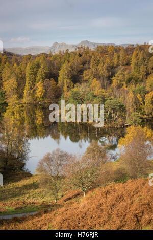 Tarn Hows et les Langdale Pikes en automne dans le parc national de Lake District, Cumbria, England, UK