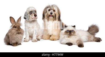Groupe de jeunes chiens, chat, lapin, in front of white