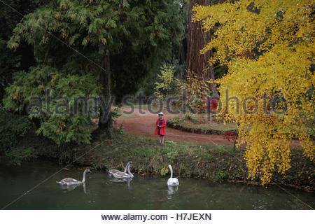 Automne forêt enchantée. Les cygnes et petite fille en robe rouge. Banque D'Images