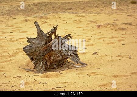 Tronc d'arbre couché dans le sable Banque D'Images