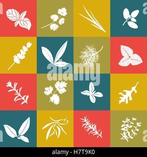 Les herbes hand drawn vector icône carré grand ensemble. Herbes culinaires populaires. Basilic, coriandre, roquette, Banque D'Images