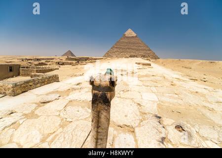 Le Caire, Égypte'monté sur un chameau à travers le désert avec les grandes pyramides de Gizeh à l'arrière-plan. Banque D'Images