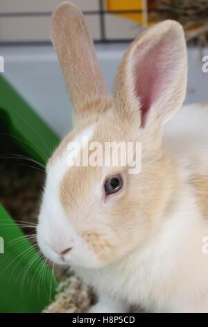 Le visage de lapin intérieur close up