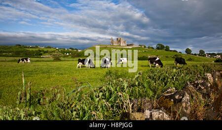 Rock of Cashel Château avec vaches laitières Holstein qui paissent dans un champ, ciel bleu, comté de Tipperary, Banque D'Images