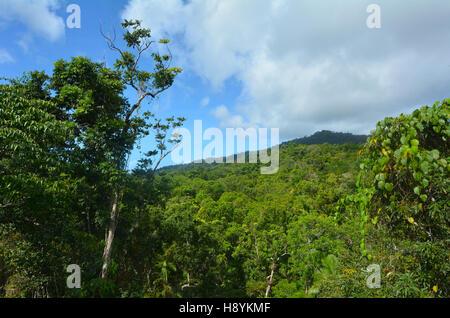 Vue paysage aérien du parc national de Daintree auvent dans le nord tropical du Queensland, Australie Banque D'Images