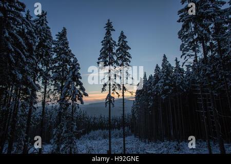 L'hiver et la neige dans les montagnes du Harz forêt après l'heure du coucher du soleil en Allemagne Banque D'Images