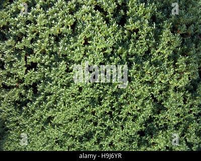 Résumé fond feuilles fougères tropicales tige verte Banque D'Images