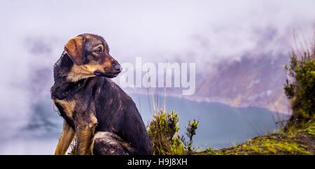 Chien au lac de cratère Quilotoa Equateur Banque D'Images