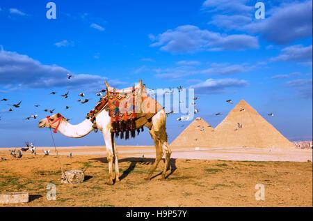 Pyramides de Gizeh, Le Caire, Egypte Banque D'Images