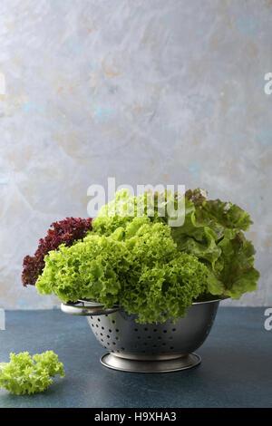 Laitue fraîche et verte , gros plan alimentaire Banque D'Images