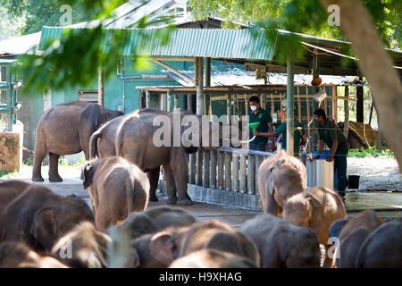 Les éléphants d'Asie, l'éléphant d'Udawalawe Accueil Transit, Sri Lanka Banque D'Images