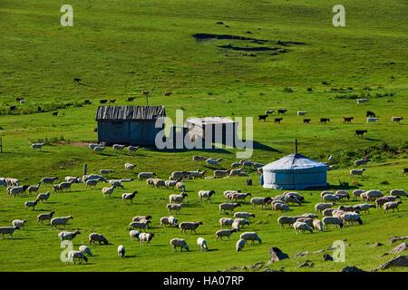 La Mongolie, province Övörkhangaï, vallée de l'Orkhon, camp nomade, la yourte Banque D'Images