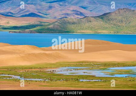 La Mongolie, province Zavkhan, Khar Nuur Lake; le troupeau de chevaux Banque D'Images
