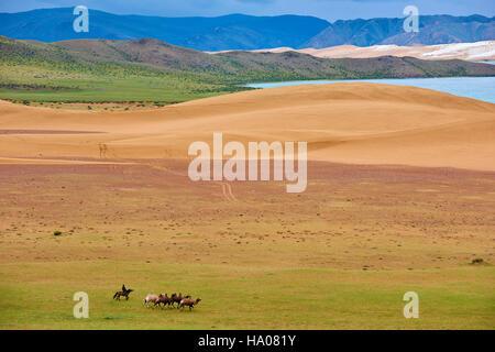 La Mongolie, province Zavkhan, lac Khar Nuur, troupeau de chameaux Banque D'Images