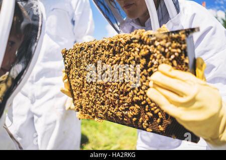 Cadres à couvain holding apiculteurs avec des abeilles Banque D'Images