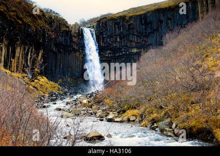 Svartifoss (noir) tombe en cascade dans le parc national de Skaftafell Vatnajökull en Islande, Banque D'Images