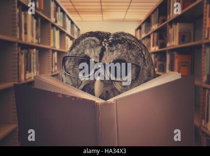 Un hibou oiseau est le port de lunettes et la lecture d'un livre de bibliothèque pour l'éducation, la créativité ou l'apprentissage concept.